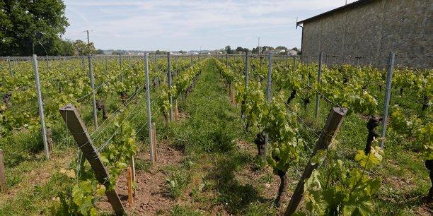 France: 30 millions d'euros supplementaires pour la filiere viticole[reuters.com]