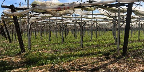 Bruxelles adopte des mesures de soutien a la filiere viticole[reuters.com]