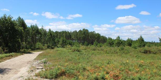 La commune de Belin-Béliet (33) veut accueillir 71.000m² d'entrepôts sur une parcelle pour partie en zone humide et dans le Parc naturel régional des Landes.