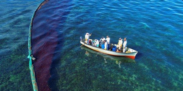 Les especes marines touchees par la maree noire sur l'ile maurice[reuters.com]