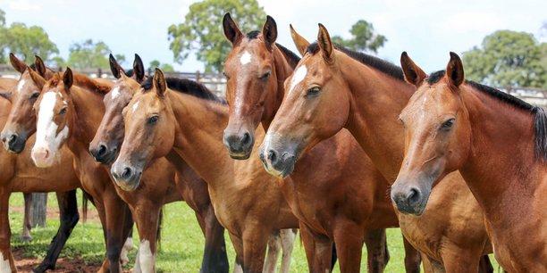 La biotech belge GST, acquise par Boehringer Ingelheim, travaille sur des produits à partir de cellules souches à destination des chevaux et des chiens.