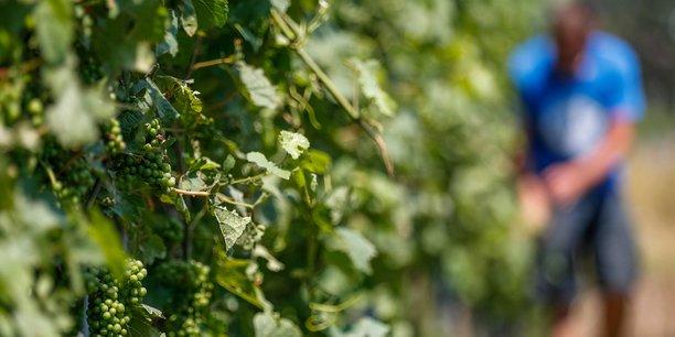 Photo d'illustration. On observe une remontée vers le Nord des zones de culture potentielle de la vigne, fait savoir le climatologue Hervé Quenol.