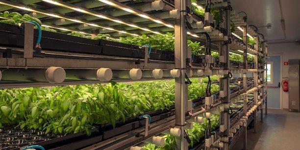 Dans les fermes verticales, l'utilisation de plusieurs niveaux de culture permet de rentabiliser au maximum les surfaces, plus chères en milieu urbain.