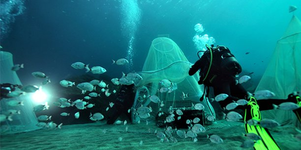 Un relâcher de poissons par Ecocéan.