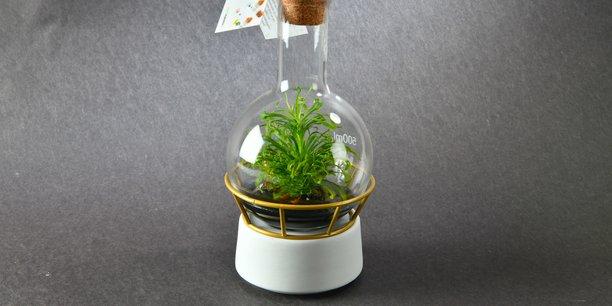 Ces végétaux grandissent dans un environnement clos adapté.