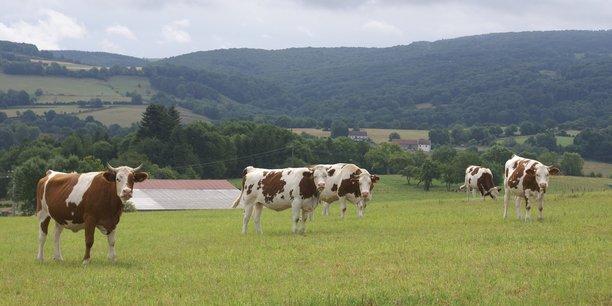 Les massifs français demandent notamment la reconnaissance de toutes les surfaces comme outils de production, y compris les surfaces pastorales qui représentent 2,2 millions d'hectares valorisés par plus de 35.000 exploitations.