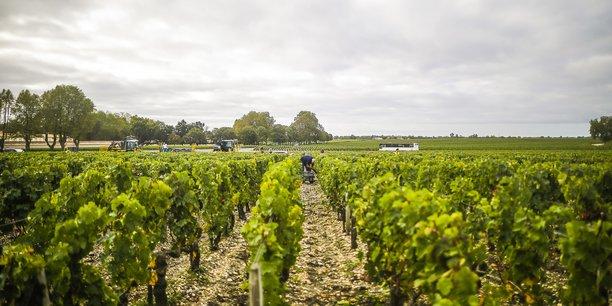 Parcelle de vigne dans le Médoc.