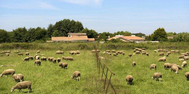 Les habitants des zones périurbaines interrogés par l'A'urba préfèrent parler de campagne urbaine pour décrire un cadre de vie auquel ils sont très majoritairement attachés. Ici, Le Haillan, à Bordeaux Métropole.
