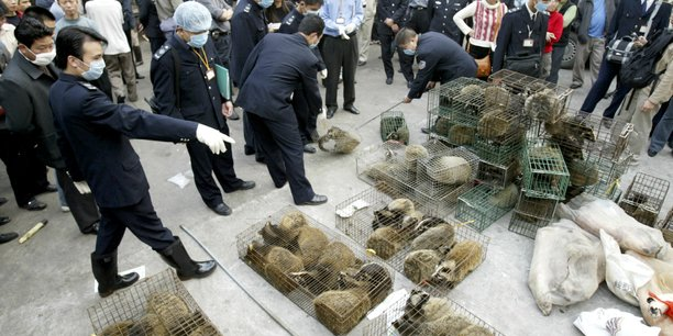 Le 5 janvier 2004, à Guangzhou, capitale du Guangdong (Chine), la police chinoise mène une opération de confiscation de civettes vivantes et d'autres animaux abattus sur un marché d'animaux sauvages afin d'éliminer les sources de contaminations possibles de la maladie du syndrome respiratoire aigu sévère (SARS), lors de l'épidémie qui a duré de 2002 à 2004.