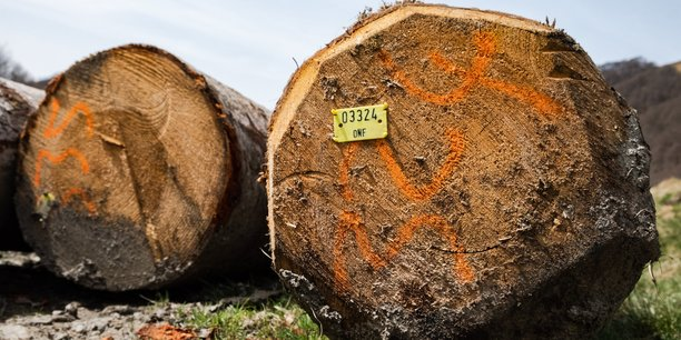 Les forestiers français n'exportent pas, ils vendent à des acheteurs via leur coopérative, leurs experts ou directement à des négociants, des scieurs, des industriels. En France, si la manière d'exploiter ses bois est libre, l'État intervient pour que la forêt soit exploitée durablement.