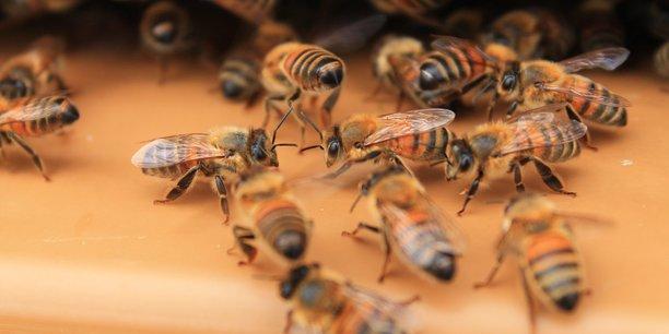 Les abeilles assurent la détection des éléments polluants dans l'air de manière presque infaillible
