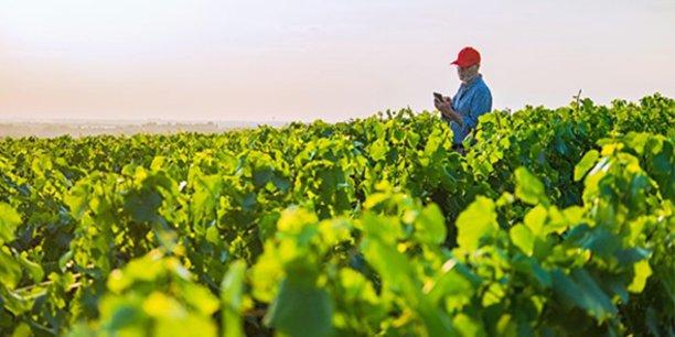 ITK lance un service d'alertes agro-climatologiques pour l'agriculture.