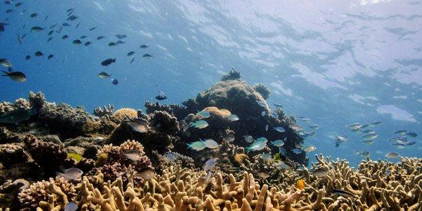 La grande barriere de corail devrait etre classee en danger[reuters.com]