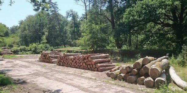 La start-up Neosylva développe un concept qui permet de dissocier le foncier et l'investissement dans la forêt, de manière à trouver des financiers qui investissent dans la forêt.