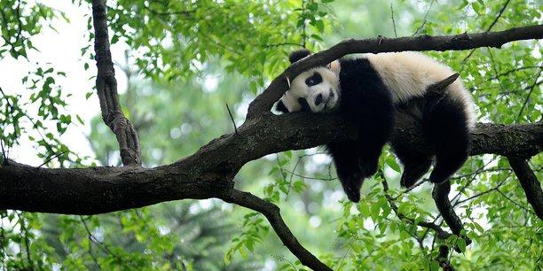 La declaration de kunming sur la biodiversite a ete adoptee[reuters.com]