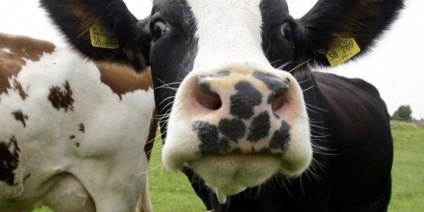 Grâce aux recherches de l'Ira, les vaches seront bientôt nourrie de manière parfaitement personnalisée. (Photo : Reuters)