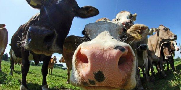 Le prix moyen du lait payé aux producteurs est passé sous la barre des 300 euros le litres et ne permet plus de rémunérer la production de nombreux producteurs.