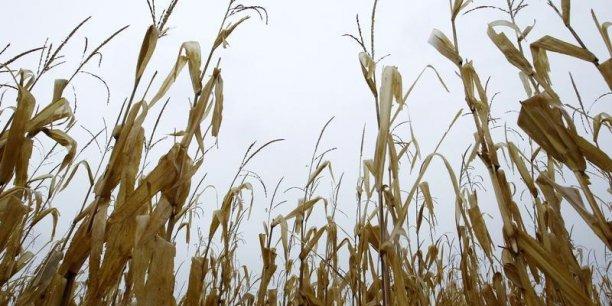 Les États réfractaires, dont la France, auront la possibilité d'interdire les semis sur leur territoire. Reuters.