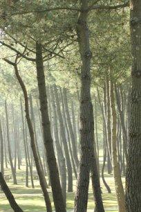La forêt des Landes est au centre de l'activité du groupe Gascogne