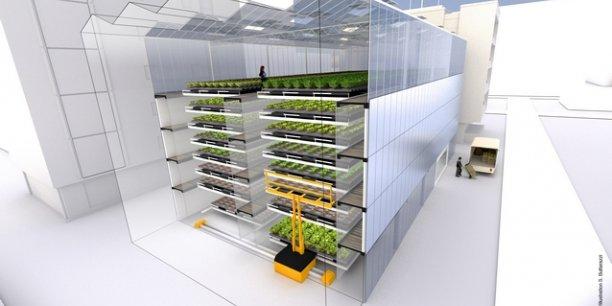 Le projet de ferme urbaine s'oriente dans un premier temps dans la production de salades.© FUL Illustration S. Buttarazzi