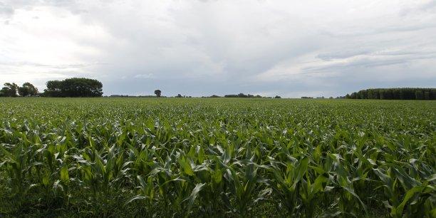 Le secteur agricole argentin compte bien profiter de l'embargo russe sur les produits européens et nord-américains pour s'exporter, relançant une économie en difficulté.