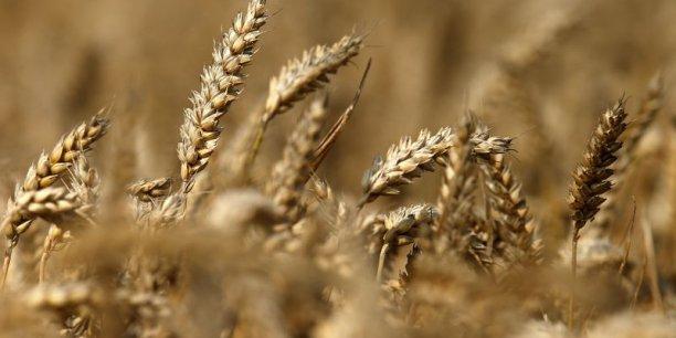 Avec une hausse de la température de 4°C par rapport à l'ère pré-industrielle, le rendement des cultures de soja pourrait  chuter de 30 à 70% au Brésil, selon la Banque mondiale.
