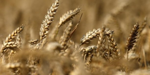En janvier, un premier prêt, de 100.000 euros, a été accordé à une entreprise française de semences bio, via le Slow Money francophone. REUTERS. .