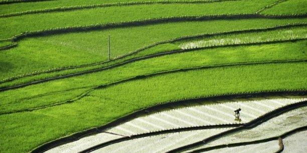 Plus de 40% des terres agricoles en Chine sont dégradées[reuters.com]