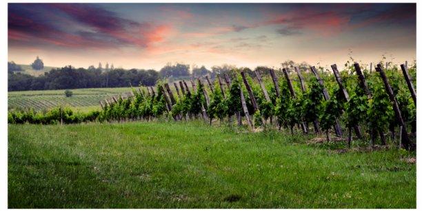 Dix ans. C'est la marge réduite affichée par la viticulture pour engager sa réinvention et faire la course à l'innovation pour assurer sa perenité.