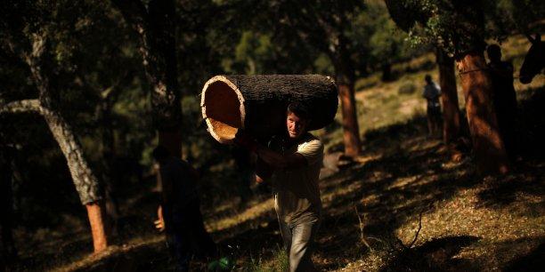 59% des salariés étrangers en Espagne ont touché le revenu minimum en 2013 (ci-dessus un travailleur dans une forêt près de Malaga au sud de l'Espagne).