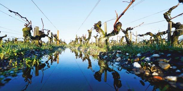 En Médoc, les vignobles de Margaux et Moulis ont été particulièrement touchés.