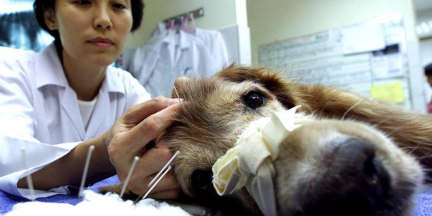 Le groupe va également doubler son équipe commerciale dans ce pays pour porter sa stratégie de pénétration du marché vétérinaire américain.