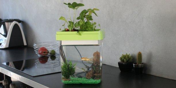 Ozarium, le petit aquarium-potager