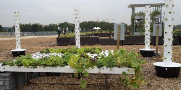 A Saint-Cyr l'Ecole (Yvelines), le premier démonstrateur d'agriculture urbaine de France sur une ancienne friche de 3,5 hectares.