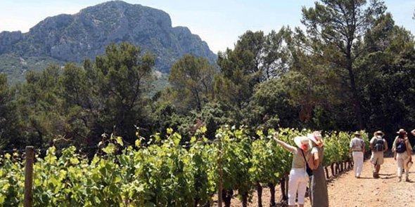 L'AOC Languedoc couvre quatre départements et 531 communes