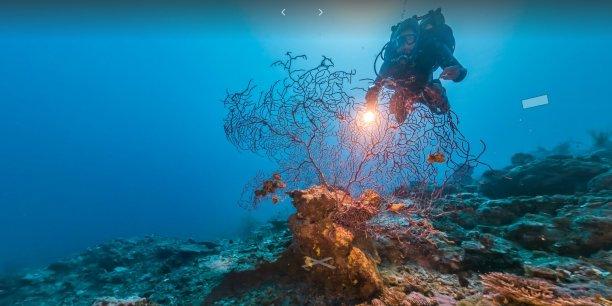 Google enregistre ainsi les changements, rarement visibles, intervenus sous la mer, en raison du changement climatique, à la pollution, à la pèche sauvage.