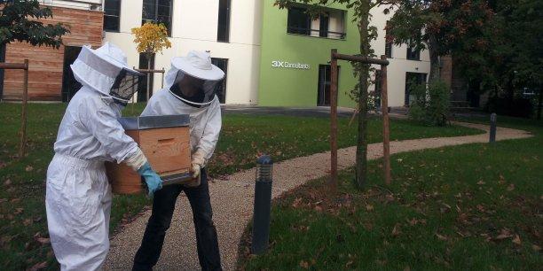 Une ruche est installée dans l'entreprise toulousaine 3X Consulants