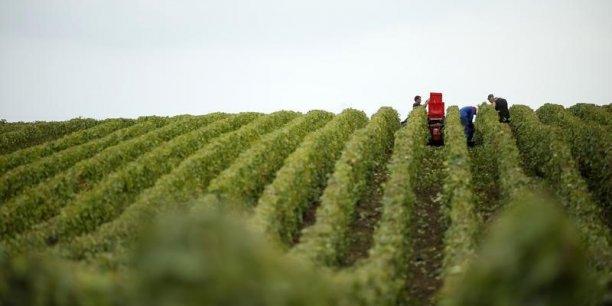 La production devrait diminuer dans toutes les régions viticoles de l'Hexagone, sauf en Languedoc-Roussillon.
