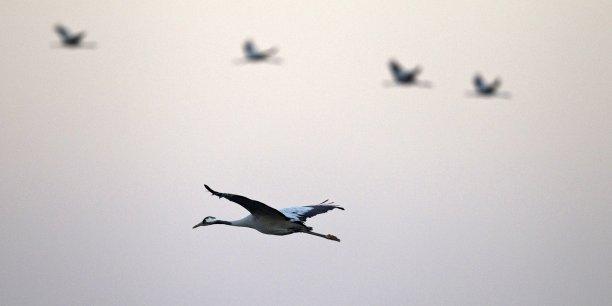 La consommation de carbone, l'abondance des oiseaux et le recyclage des déchets devraient devenir des indicateurs de la croissance, selon le think tank.