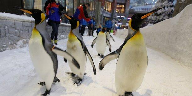 Dubaï dispose déjà d'une station de ski artificielle, ouverte en 2005 dans un centre commercial. Elle est considérée à ce jour comme le plus grand complexe de ski couvert au monde par le Guinness World Records.