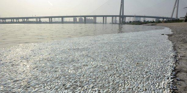 Selon l'agence gouvernementale China Today, le niveau de cyanure relevé dans la rivière n'a pas atteint un niveau toxique. Cependant, les autorités chinoises ont d'ores et déjà admis que les niveaux de cyanure à l'intérieur de la zone d'isolement, délimitée autour des déflagrations, étaient 365 fois supérieur au seuil de tolérance.
