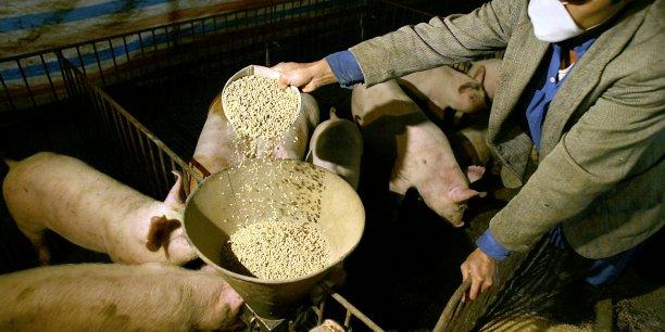 Les Néerlandais utiliseraient ainsi ces aides plutôt pour un abattage avancé des porcs (avant l'âge auquel ils sont généralement abattus), les Allemands pour des prêts préférentiels aux agriculteurs.