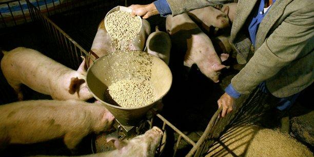 Après la grande distribution, puis le conflit actuel avec les industriels-transformateurs, les producteurs de cochon doivent composer avec les fabricants d'alimentation animale et leur hausse du prix.