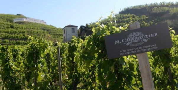 La Maison M. Chapoutier a été élue marque de vin française la plus admirée au monde.