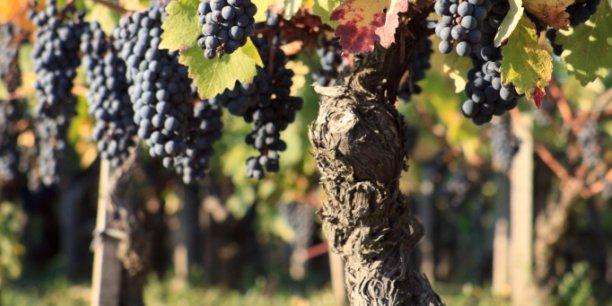 Ces vignes là (Celles de chateau Montrose en Médoc) n'ont pas besoin d'être soignées, mais pour les autres, la Maison Hennessy investit et c'est la recherche bordelaise qui rafle la mise