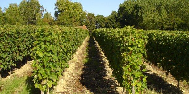 L'ex-Aquitaine est sur le podium des principales régions européennes pour la superficie de son vignoble.