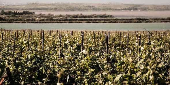 site de rencontres viticulteurs