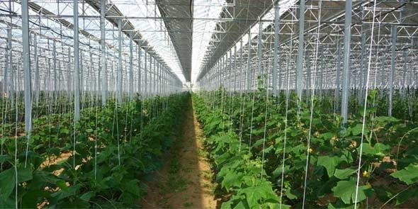 Serres solaires la chambre d 39 agriculture des p o r clame un moratoire - Chambre d agriculture 49 ...
