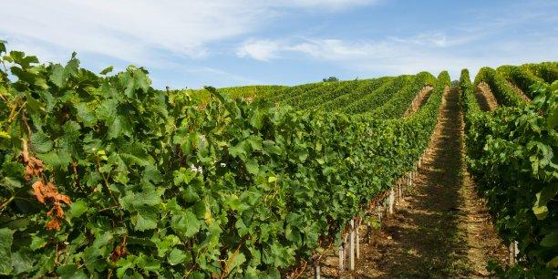Si le marché foncier rural girondin est globalement en progression par rapport à 2015, le marché des vignes poursuit sa baisse amorcée en 2014 avec une perte de 16 % des surfaces mises sur le marché et de 11 % en valeurs.