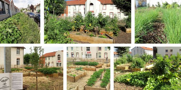 Plusieurs potagers urbains où les légumes sont à disposition des habitants